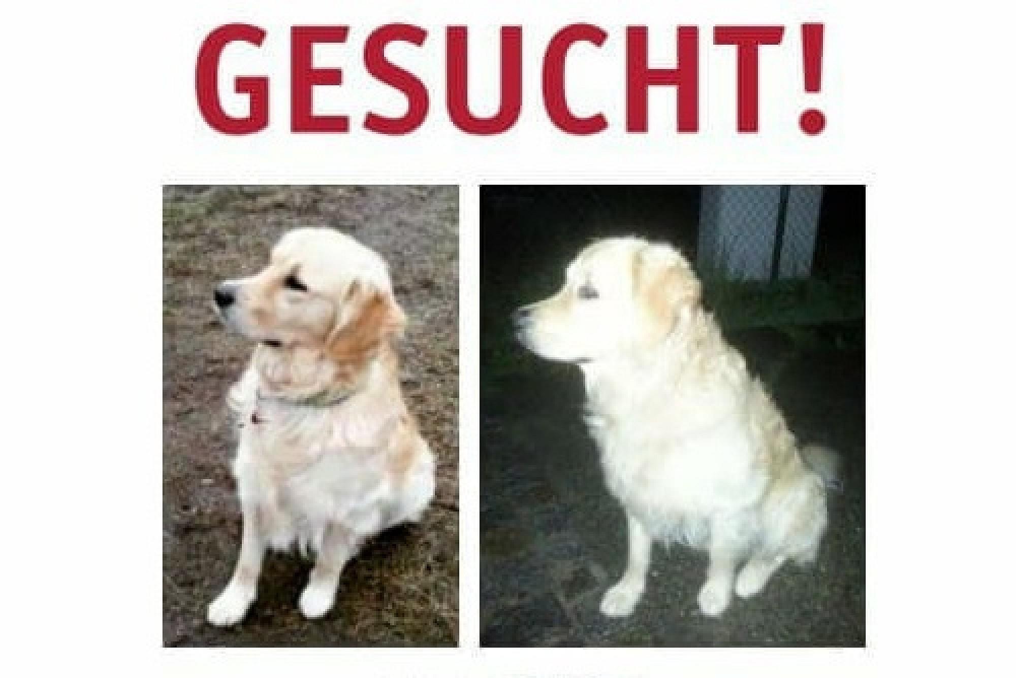 Tierheim Garmisch-Partenkirchen - Tierschutzverein - Hundepension ...
