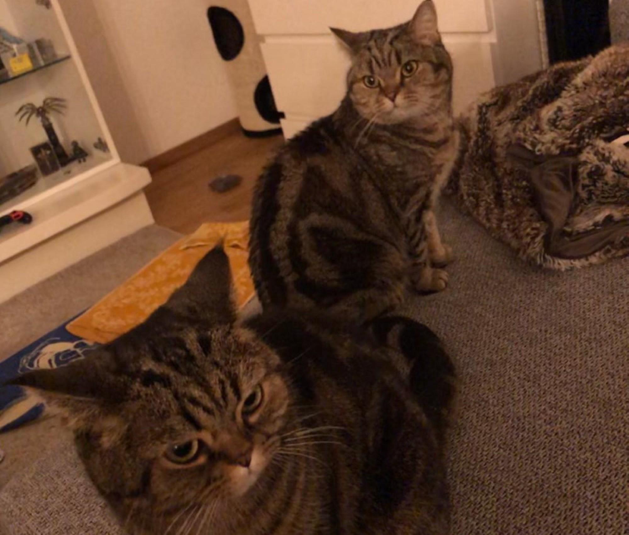 In Katzen Tiere Not Hunde 8nvN0wm